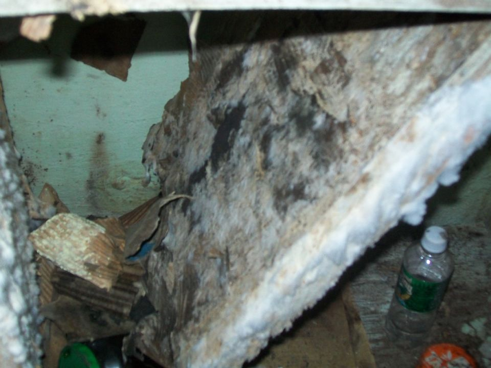 mold in the basement on curezone image gallery