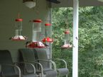 Hummingbirds 6
