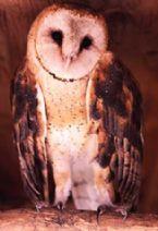 012 Owl