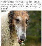 dogeatdogworld