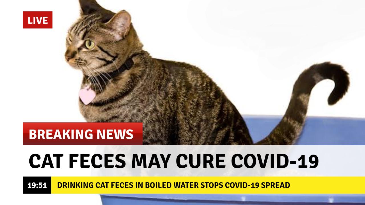 catfeces