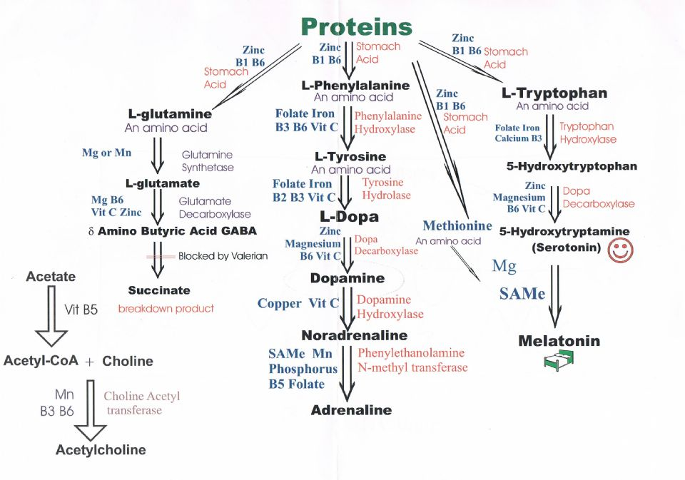 Amino acid chart on curezone image gallery fandeluxe Images