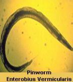 parasites/different_photos