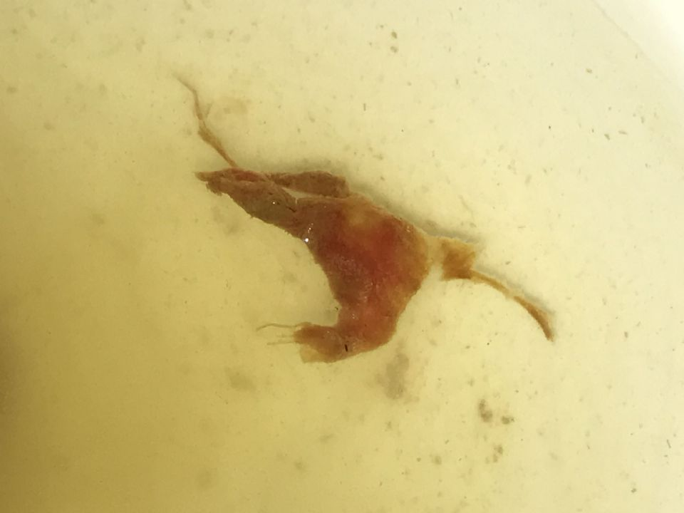 http://curezone.com/upload/Parasites/Forum_01/IMG_1783.jpg