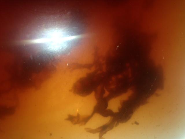 http://curezone.com/upload/Parasites/Forum_01/IMG_4804.jpg
