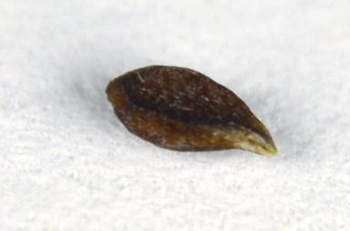 http://curezone.com/upload/Parasites/Forum_01/_DSC0068.jpg