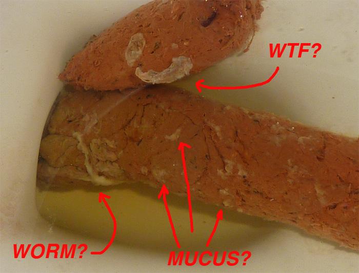 Strange Poop - parasites? Mucus?