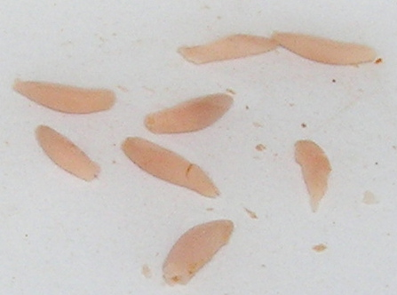 Grains Of Rice In Cat Food Looks Like