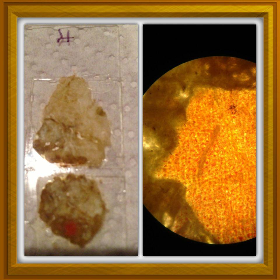 calcium carbonate rocks