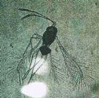 http://curezone.com/upload/Parasites/tn-monsterbug.jpg