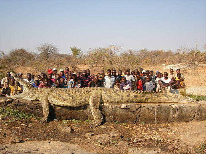 22 ft    2500 lbs Crocodile ... (Click to enlarge)