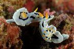 Underwater World23