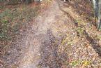 Shadow on a Dixie trail