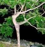 Angel Tree, Georgia
