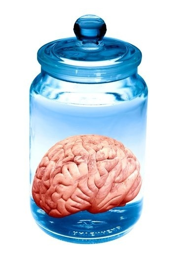 P325206 Preserved brain artwork SPL