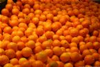 Clementines 2005  0050