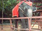 Elephant, Thailand 2004