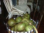 Coconuts, Thailand 2004