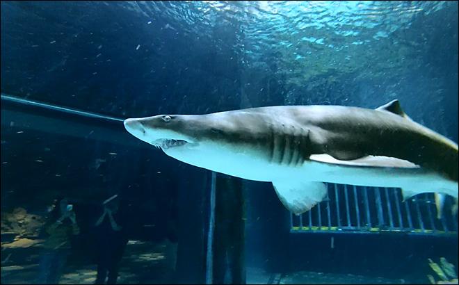 http://curezone.com/upload/_A_Forums/Ask/131010_shark_dive_lg.jpg