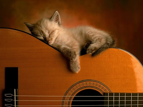 http://curezone.com/upload/_A_Forums/Ask/cats_in_the_cradle_v.jpg