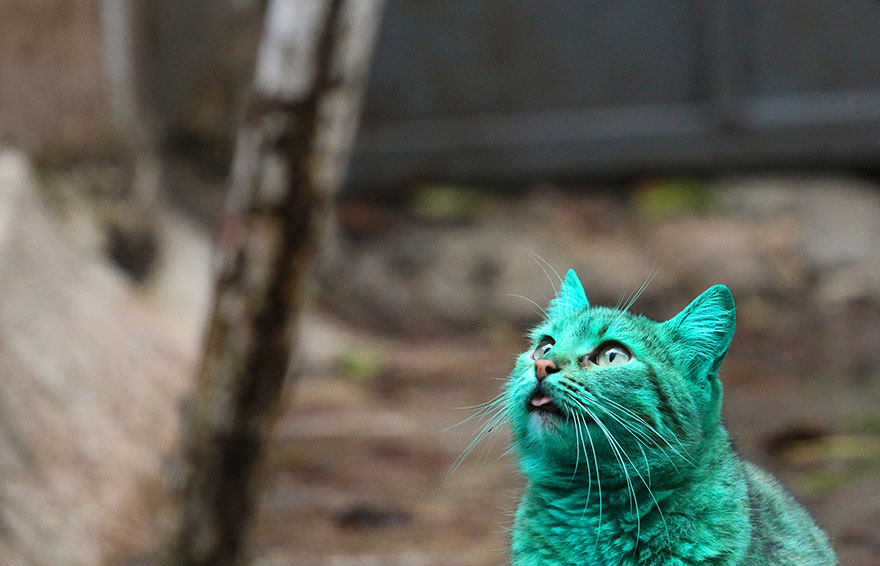http://curezone.com/upload/_A_Forums/Ask/green_cat_varna_bulgaria_1.jpg