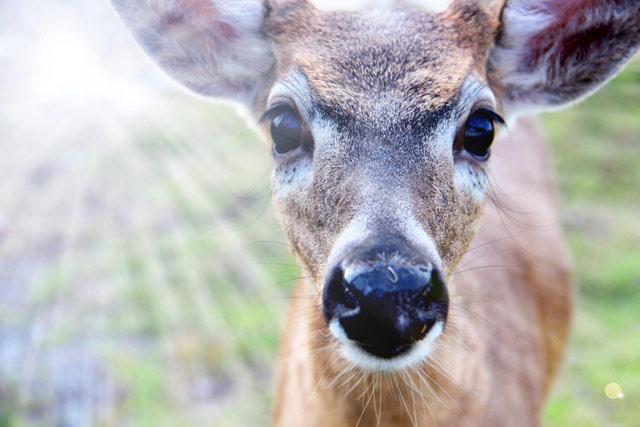 https://www.curezone.org/upload/_A_Forums/Ask/key_deer.jpg