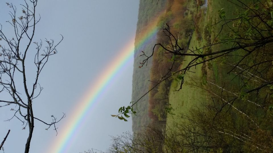 Rainbow of life ... (Click to enlarge)