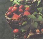 cornish cider apples