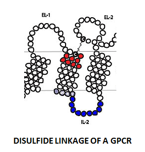 http://curezone.com/upload/_C_Forums/Candida/DISULFIDE_LINKAGE_OF_A_GPCR.png