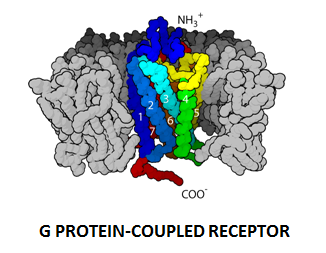 http://curezone.com/upload/_C_Forums/Candida/G_PROTEIN_COUPLED_RECEPTOR.png