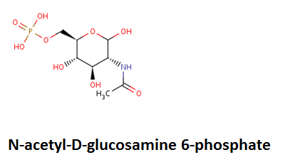 http://curezone.com/upload/_C_Forums/Candida/N_acetyl_D_glucosamine_6_phosphate.png