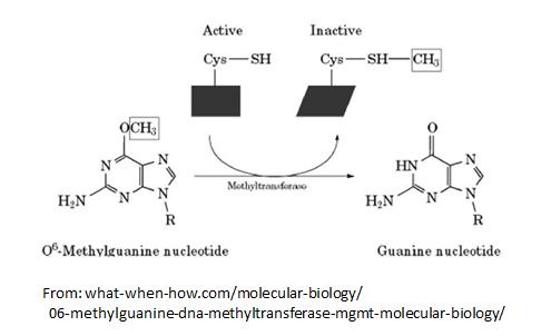 http://curezone.com/upload/_C_Forums/Candida/O6_methylguanine_DNA_transferase.png