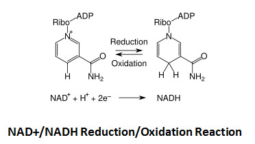 Acetaldehyde and the NAD+/NADH redox state by #147951 Blog entry