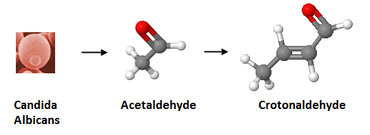 http://curezone.com/upload/_C_Forums/Candida/candida_albicans_to_acetaldehyde_to_crotonaldehyde.png