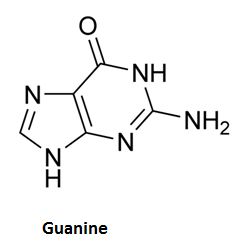 http://curezone.com/upload/_C_Forums/Candida/guanine.png