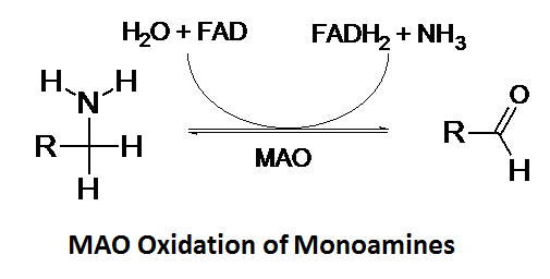 http://curezone.com/upload/_C_Forums/Candida/monoamine_oxidase.png