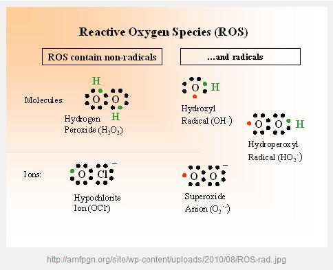 http://curezone.com/upload/_C_Forums/Candida/reactive_oxygen_species.png