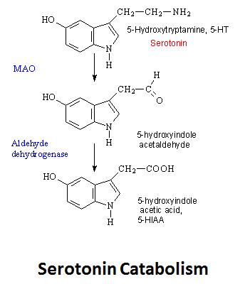 http://curezone.com/upload/_C_Forums/Candida/serotonin_catabolism.png