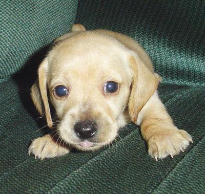 my next dog