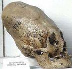 giant skulls 7