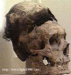 giant skulls 8