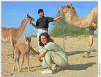 Camel Lama hybrid