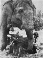 Motty Loxodonta africana x Elephas maximus