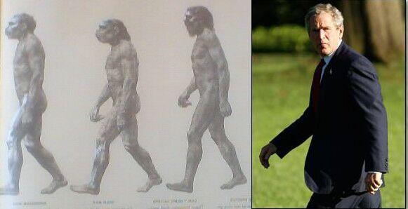 bush evolution2