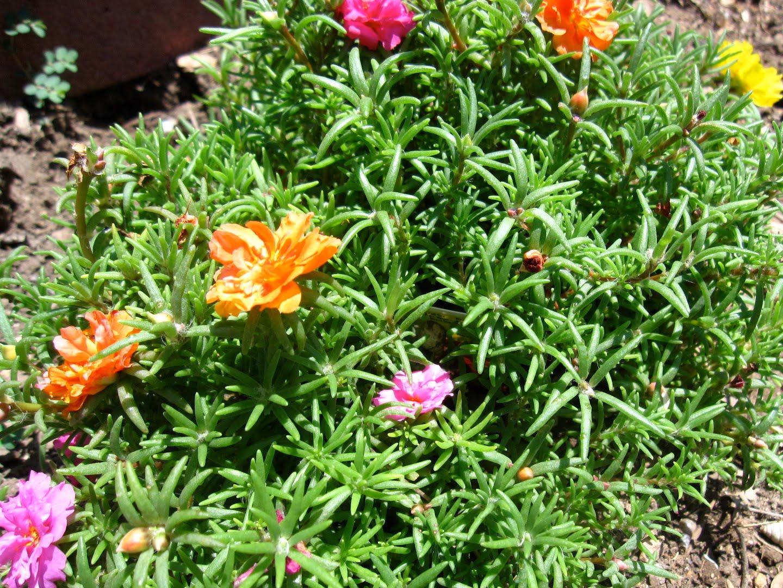 https://www.curezone.org/upload/_G_H_Forums/Gardening/img_7226.jpg