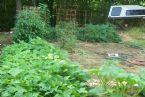 Corey's newest garden site