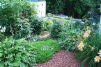backside of tomato plants