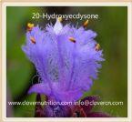 20 Hydroxyecdysone Extract