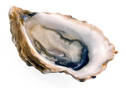 https://www.curezone.org/upload/_G_H_Forums/oyster.jpg