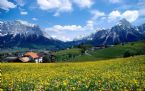 Beautiful LAndscape wallpapers for FREE!!!